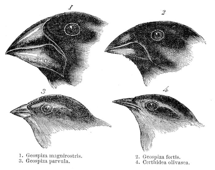 Variation Between Species: A Ground-Breaking Study of Evolution in Action