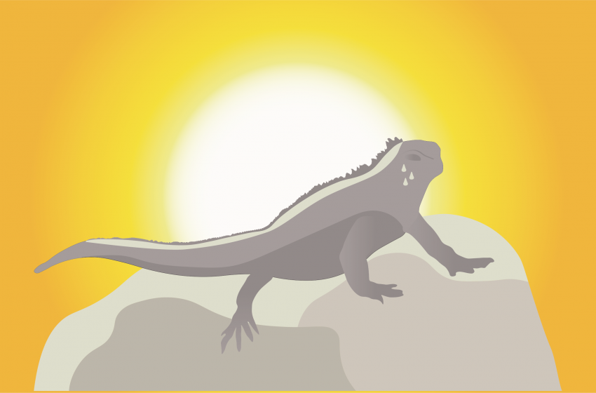 Climate Change and Marine Iguana