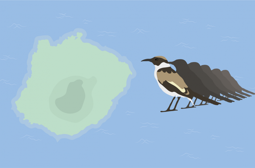 Battling Invasive Species on the Island of Floreana