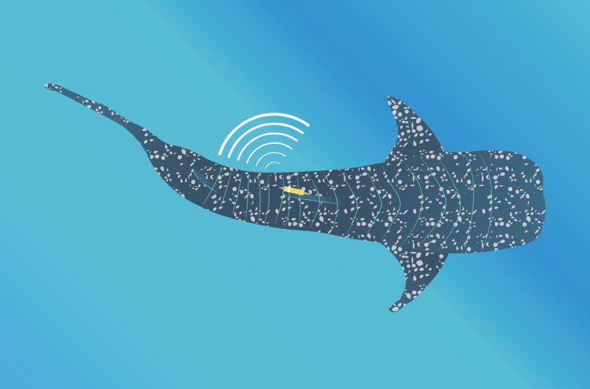 Tracking Ocean Giants Using GIS (Geographical Information Systems)